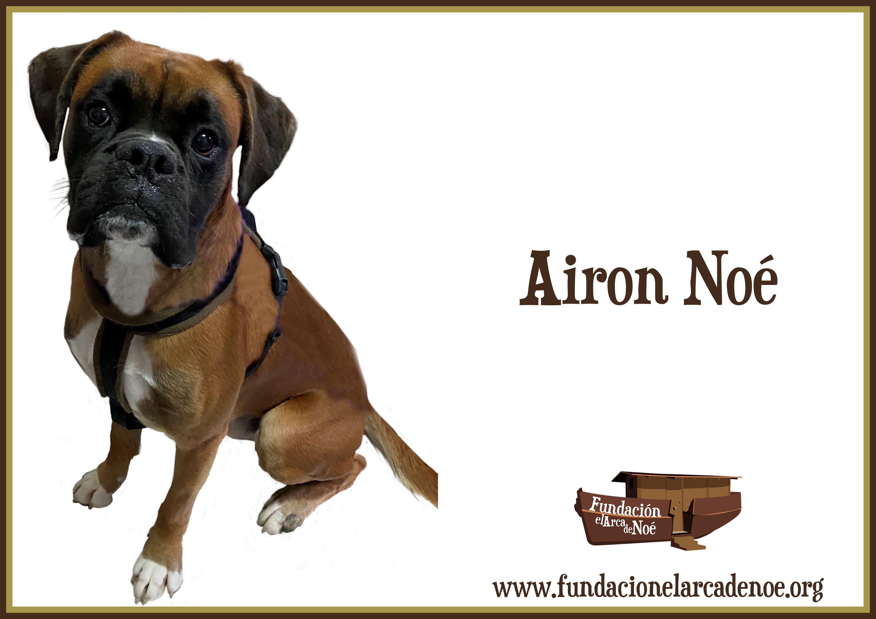 Airon Noé