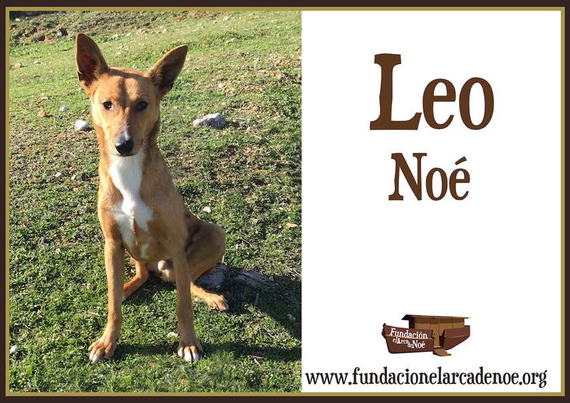 Leo Noé