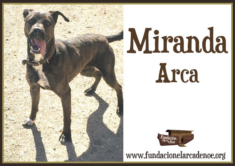 Miranda Arca