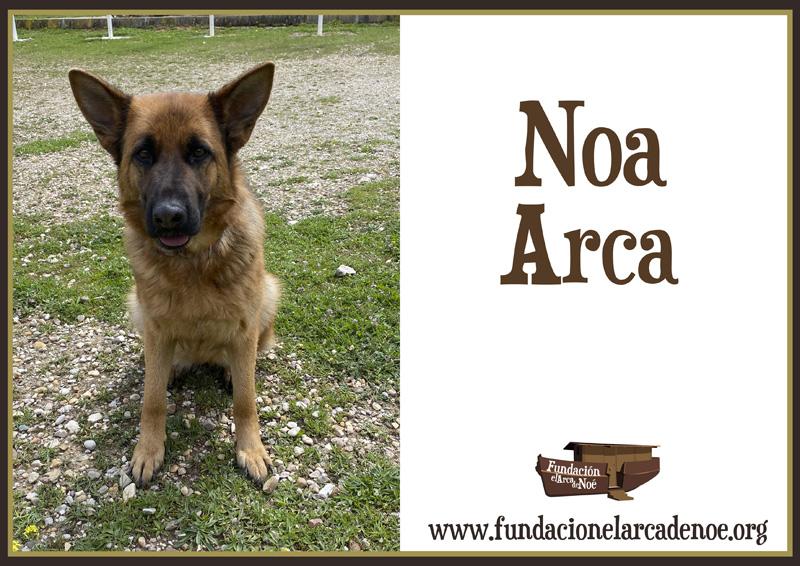 Noa Arca