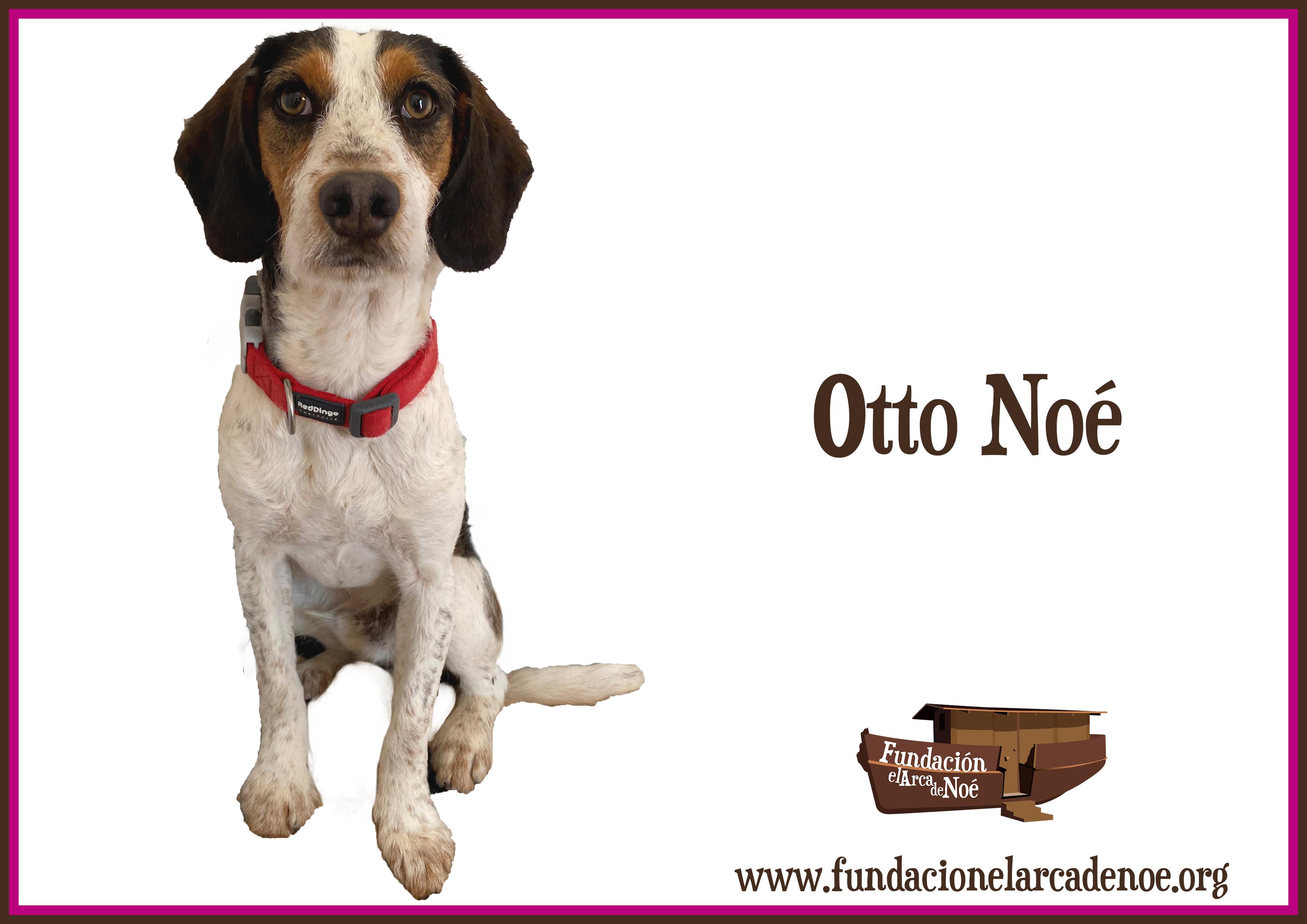Otto Noé