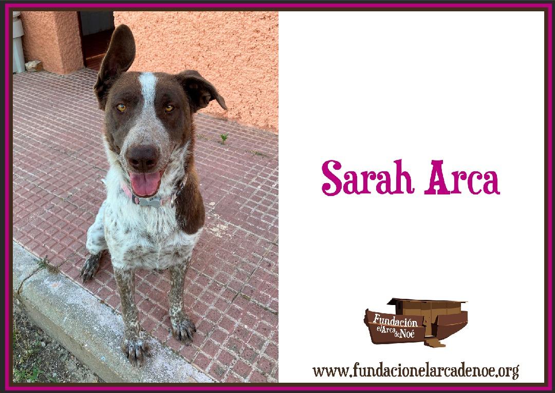 Sarah Arca