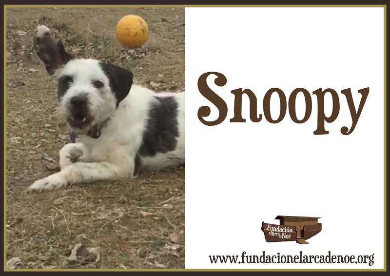 Snoopy Noé