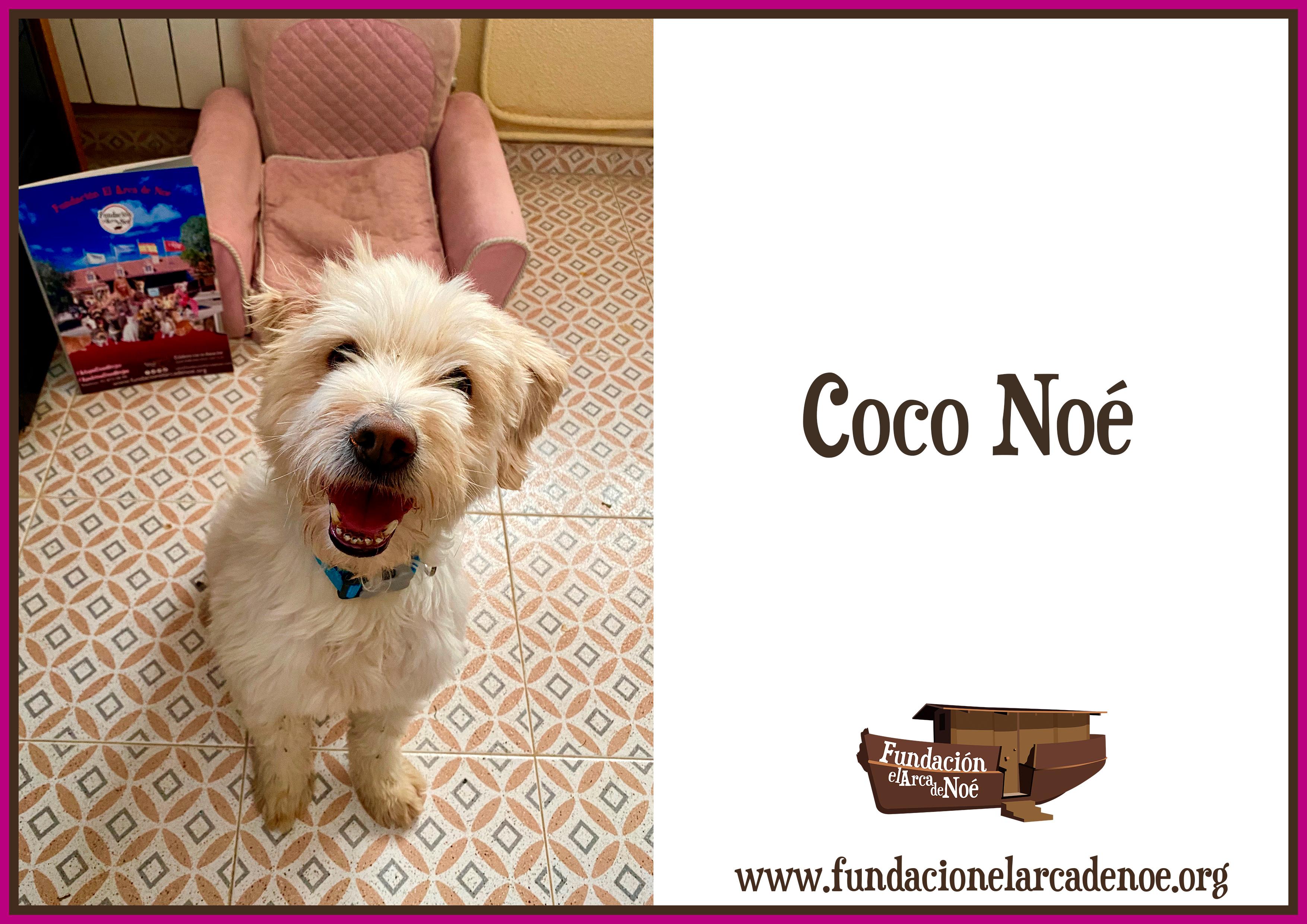 Coco Noé