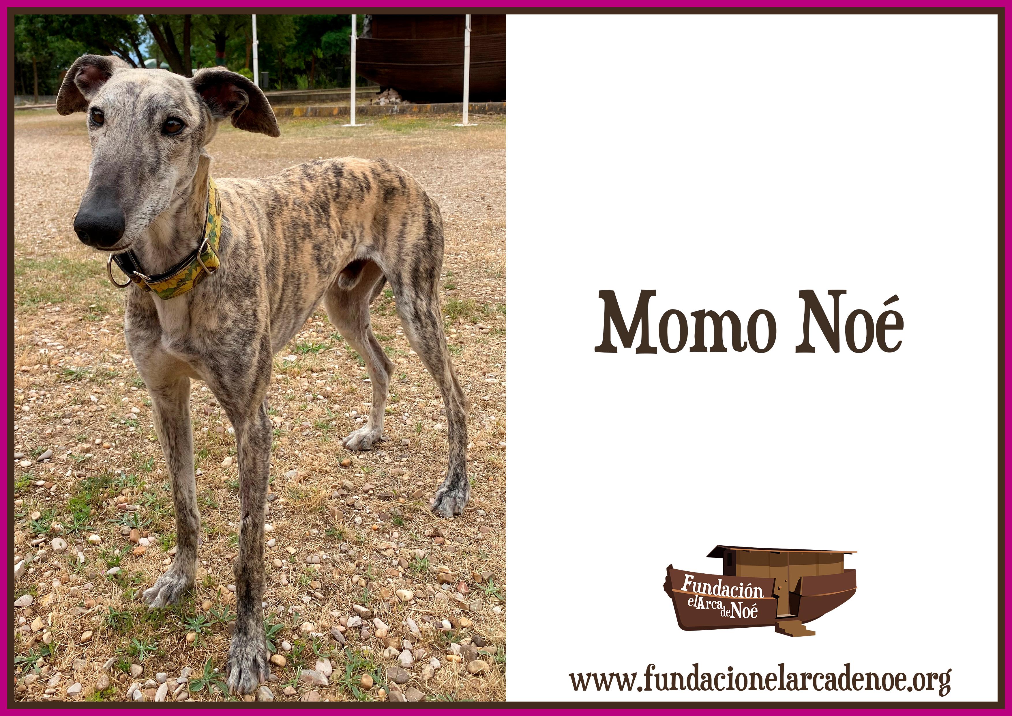 Momo Noé