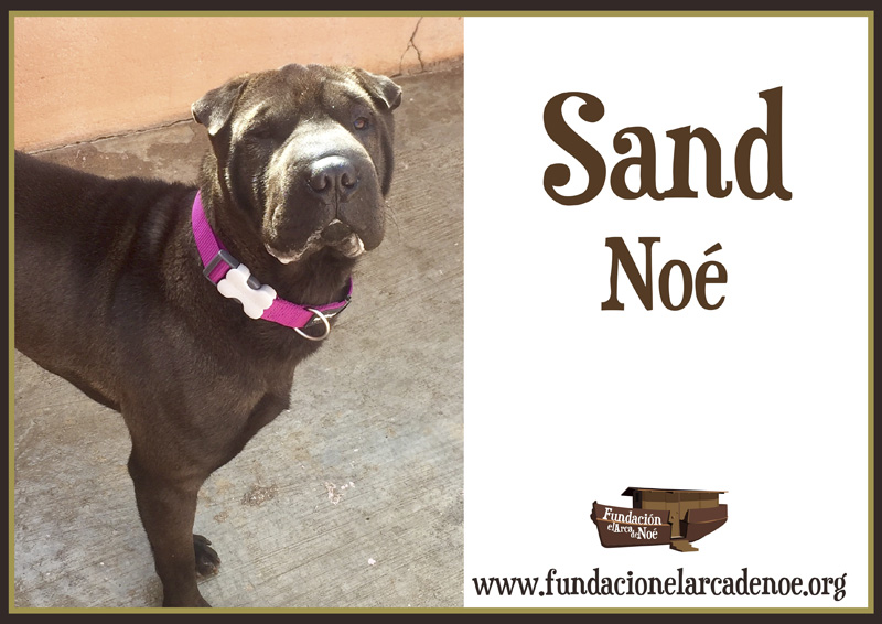 Sand Noe