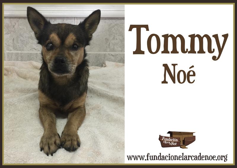 Tommy Noe